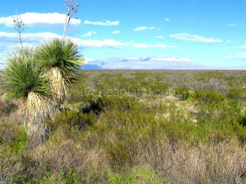 Guadalupe Mountains in the Distance