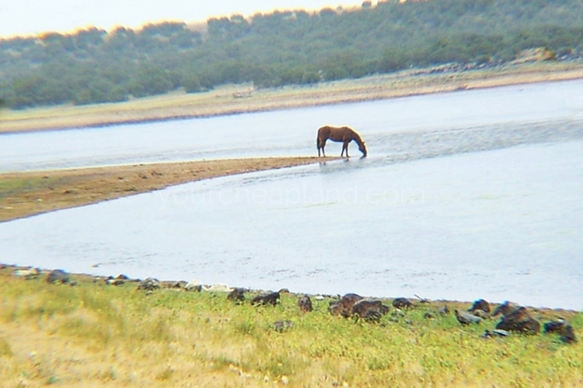 Concho Lake And Horse