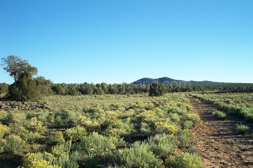 Tierra Verde Ranchettes Area