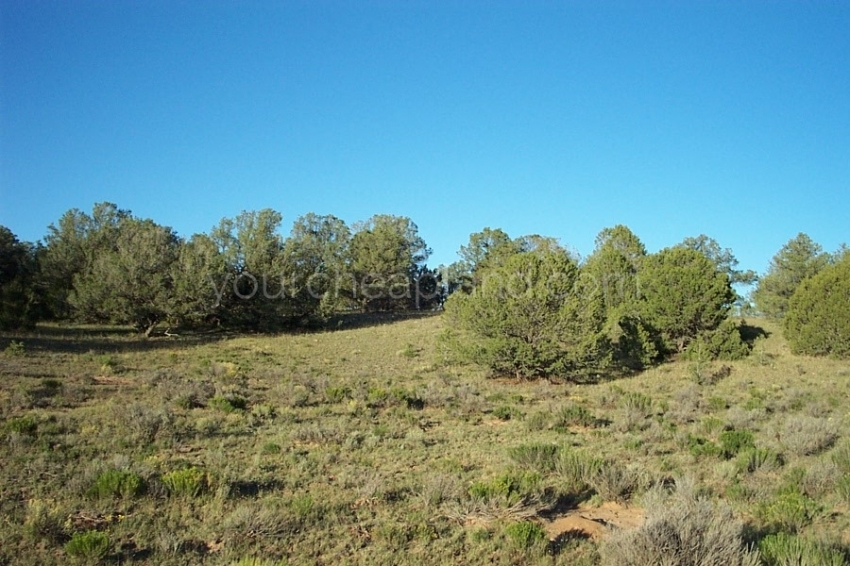 Tierra Verde Ranchettes New Mexico land for sale, wooded, meadows, open off grid living