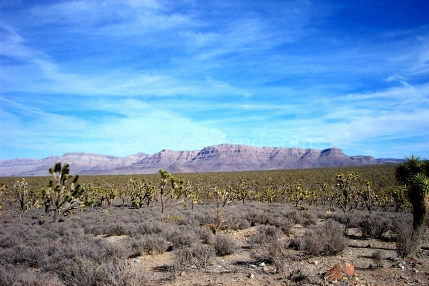 Mohave County Land